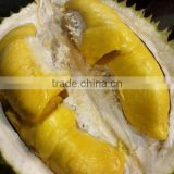 FRESH DURIAN from thailand and vietnam
