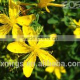 High quality St.john's wort extract Hypericins 0.3% UV