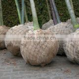 Tree Basket or Root ball netting