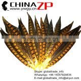 CHINAZP Factory Exporting Wholesale Top Quality Colored Yellow Lady Amherst Pheasant Tail Feathers for DIY