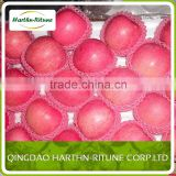 fresh fruit import red fuji apple from china