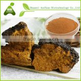 Narural Chaga Mushroom Extract Powder 30% chaga extract