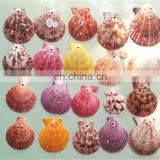 Beach Mixed Medium Shells Assorted Sea Shells home decoration pieces seashells Home Decoration