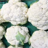 white cauliflower