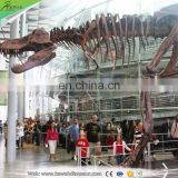 2016 Hot sale Exhibition Artificial simulation fiberglass dinosaur skeleton for kids and adults