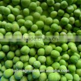 Frozen style green peas 2015 new crop