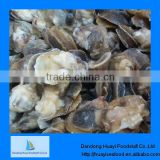 Fresh frozen boiled moon snail meat