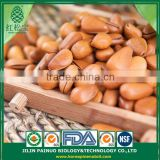 Constant Supply Dietary Supplyment Siberian Open Pine Nuts in Shell
