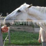 Rock Salt For Horse Licks / Animal Lick salt / Salt Licks / Himalayan Salt Licks / Salt Animal Licks / Rock Salt Cattle Feed