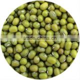 supply dry green mung bean 3.2-3.6mm