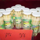 Canned asparagus in good quality with factory price