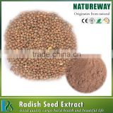 Factory directly selling radish seed extract powder,Radish powder