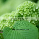 Fragrant aroma crazy selling wholesale cemetery flower indian door garland silk vision flowers wholesale from yunnan