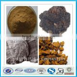 100% natural chaga mushroom extract polysaccharide50% HALAL KOSHER Factory                                                                         Quality Choice
