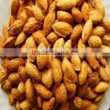 American Almond in hull