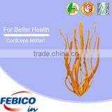 Cordyceps Extract Militaris 100% Pure Herbal Extract Powder