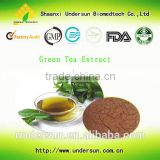 Top quality green tea extract EGCG 90% wholesale