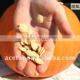 Pumpkin Seed Extract Powder/ISO9001,Kosher,