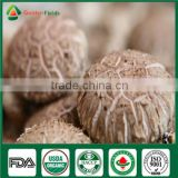 Nutritious and Medicinal Edibal Mushroom Shiitake Lentinula edodes China Supplier Organic Fresh and Dried
