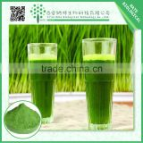 Organic 100% wheatgrass juice powder,Wheat Grass Powder,Dehydrated Wheat Grass Powder                                                                         Quality Choice