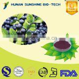 Well-being and low pesticide Blueberry Leaf Extract /Vaccinium angustifolium/Chlorogenic acid/Antioxidation&improving eyesight