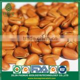 Supplier Organic Green Agriculture Siberian Open Pine Nuts in Shell