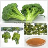 dehydrated broccoli powder/broccoli sprout powder/broccoli powder price