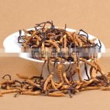 Quality cordyceps sinensis extract Yarsagumba P.E