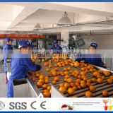citrus and similar fruits processing line