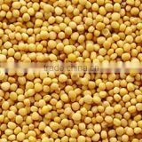 Bulk yellow mustard seed From India