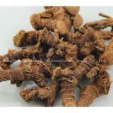 Chinese Galangal Root Dry & Clean