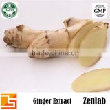 organic ginger extract 5% ginger root extract gingerol