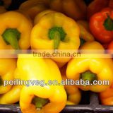 10/15kg carton bags 2013 new crop Chinese Yellow Sweet Pepper