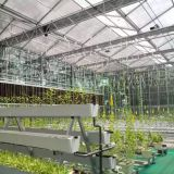 Multispan Glass Greenhouse with Hydroponic NFT System