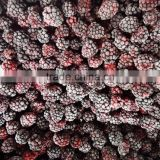 frozen fruits IQF frozen blackberries sweet blackberry