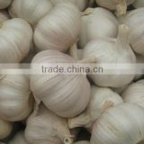 Normal white fresh garlic from China