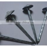 "1""*11G Galvanized Umbrella Head Plain and Ring Shank Roofing Nail (factory)"