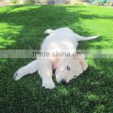 Natural looking Garden & Pet Carpet Artificial Grass