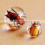 Hot selling decorative crystal ball paperweight with real flowers embedded for promotional gifts