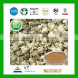 China Tribulus Terrestris extract manufacturer Tribulus Terrestris Saponins,Tribulus Terrestris Extract powder