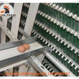 Mexico Poultry Farm A Type Battery Layer Cage & Chicken Cage with 90 Birds with Automatic Feeding Machine