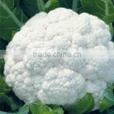 Winter King hybrid Cauliflower Seed