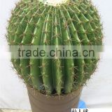 2014 popular Plastic cactus, artificial cactus plants, fake plants