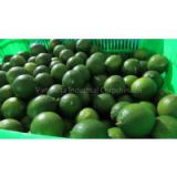 FRESH SEEDLESS LEMON/LIME (Ms. Angela - WhatsApp: +84 165 582 7745)