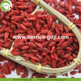 Factory Supply Nutrition Dried Lycium Berries