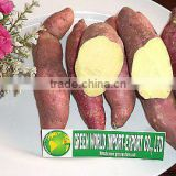 FRESH SWEET POTATO WITH HIGH QUALTIY AND BEST PRICE
