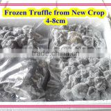top quality fresh truffle tuber indicum