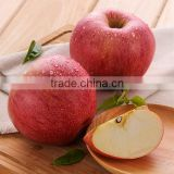 Wholesale competitive price fresh red qinguan apple exporter in China