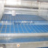 automatic pullet rear cage