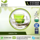 Hot Sale Natural Flavored Green Tea by Certified Manufacturer